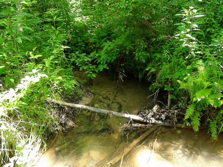 5 acres with small stream